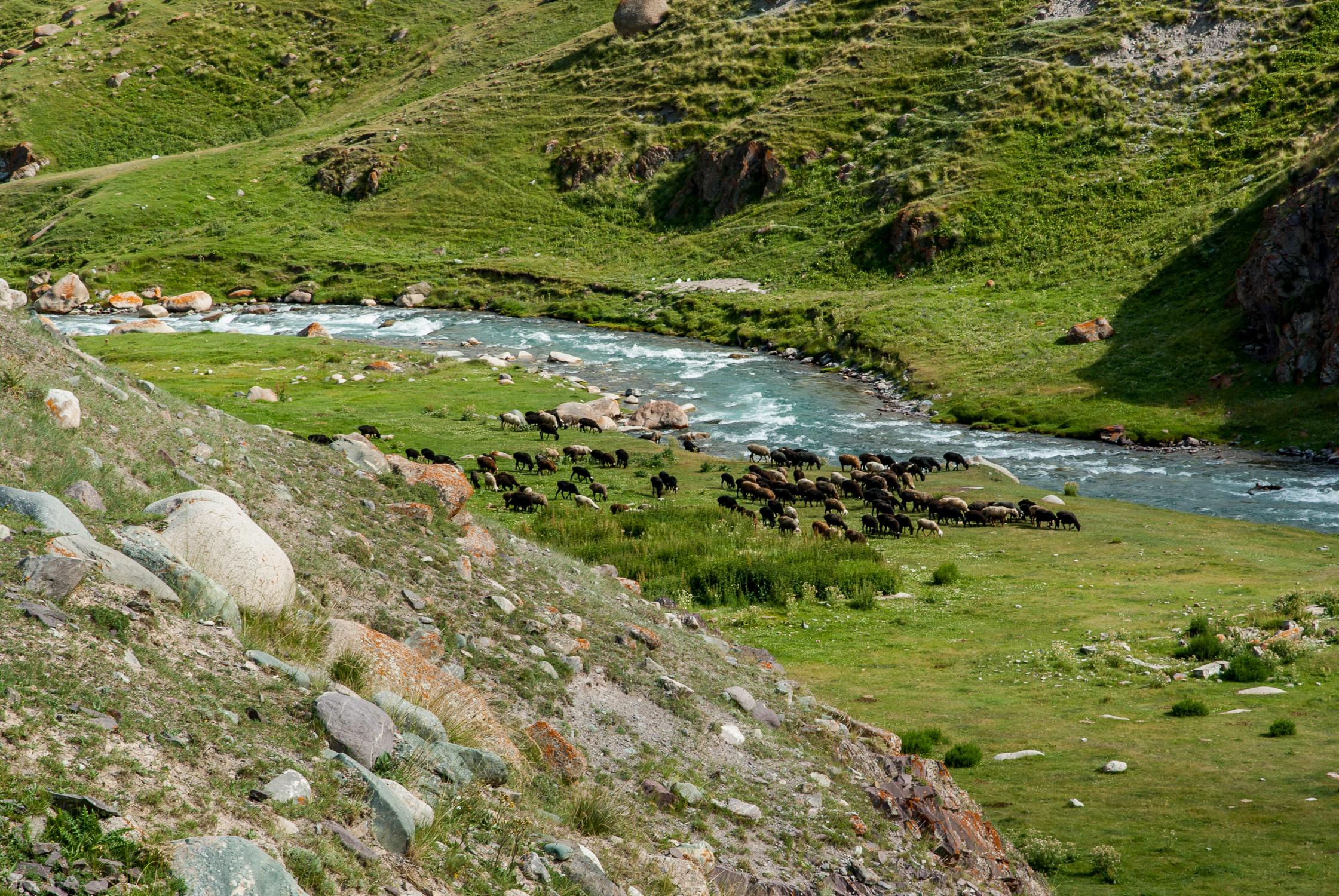 Пасущиеся в долине отары овец