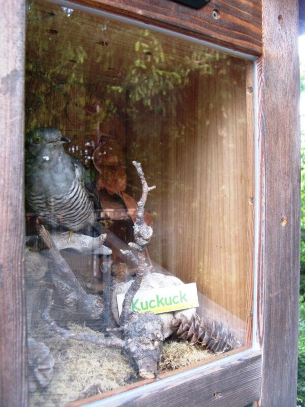 Что смотреть вБаварии— конечно, лес!