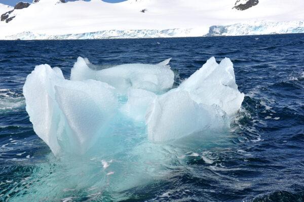 Антарктика— это прекрасно!