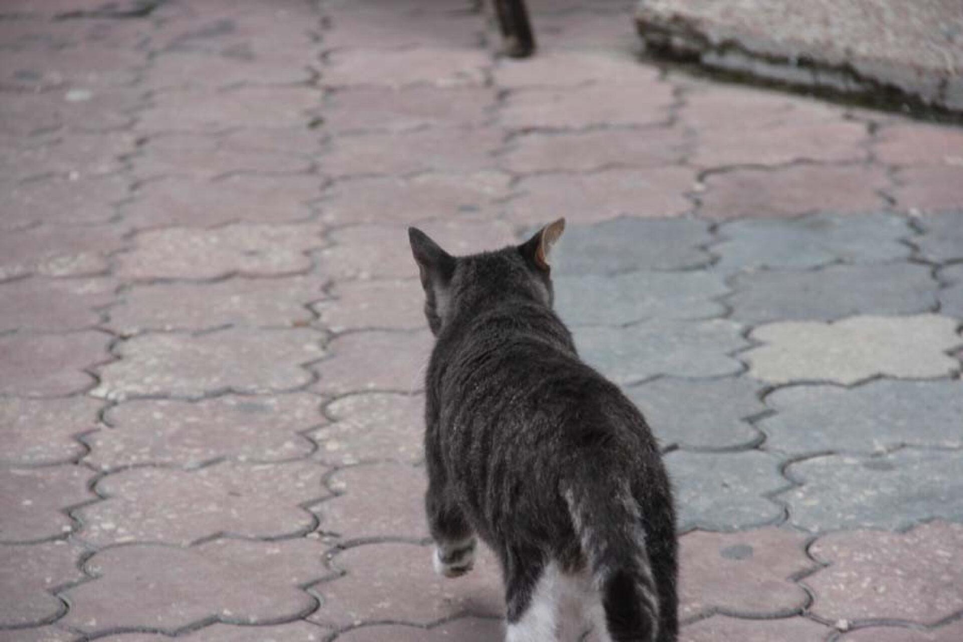 Коты вКрыму