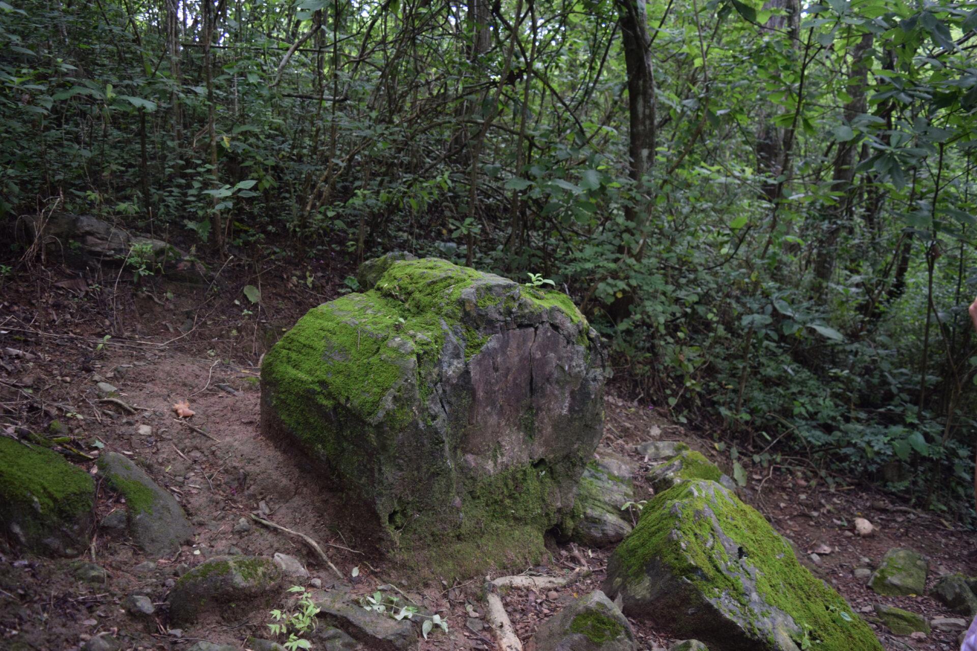 Окаменелый лес Пуянго. Эквадор