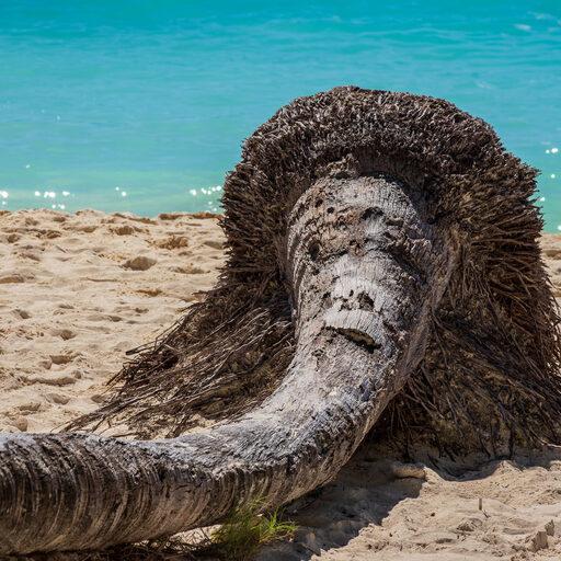 Доминикана. Остров Саона. Часть 2