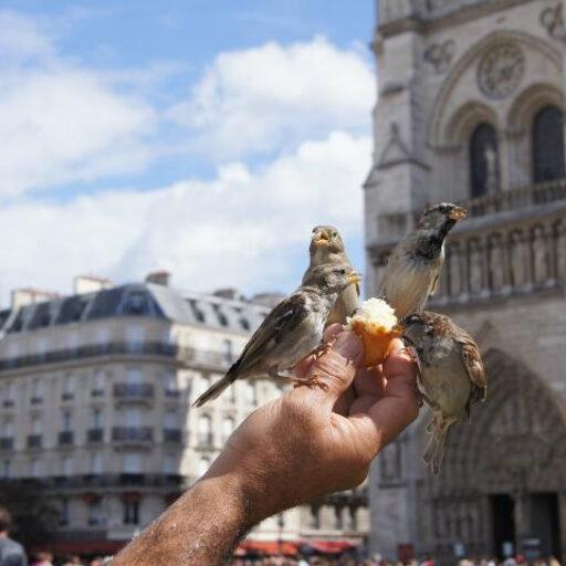 Париж-прогулка по реке Сене и птички Нотр-Дам-де-Пари