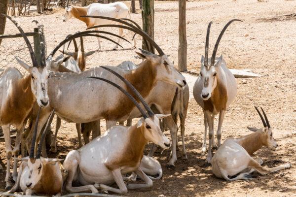 Тунис. Friguia Зоопарк