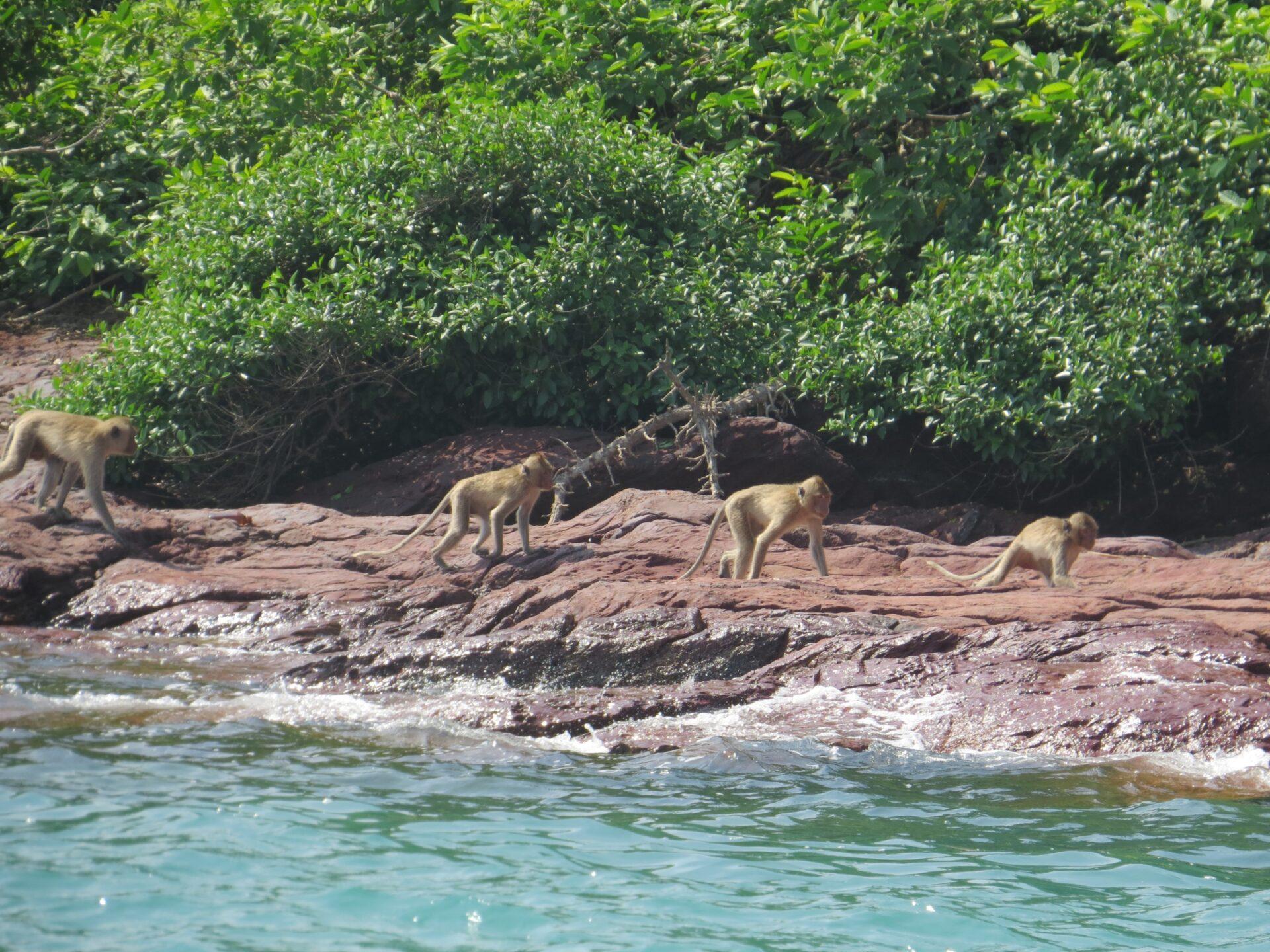 Паттайя, остров обезьян