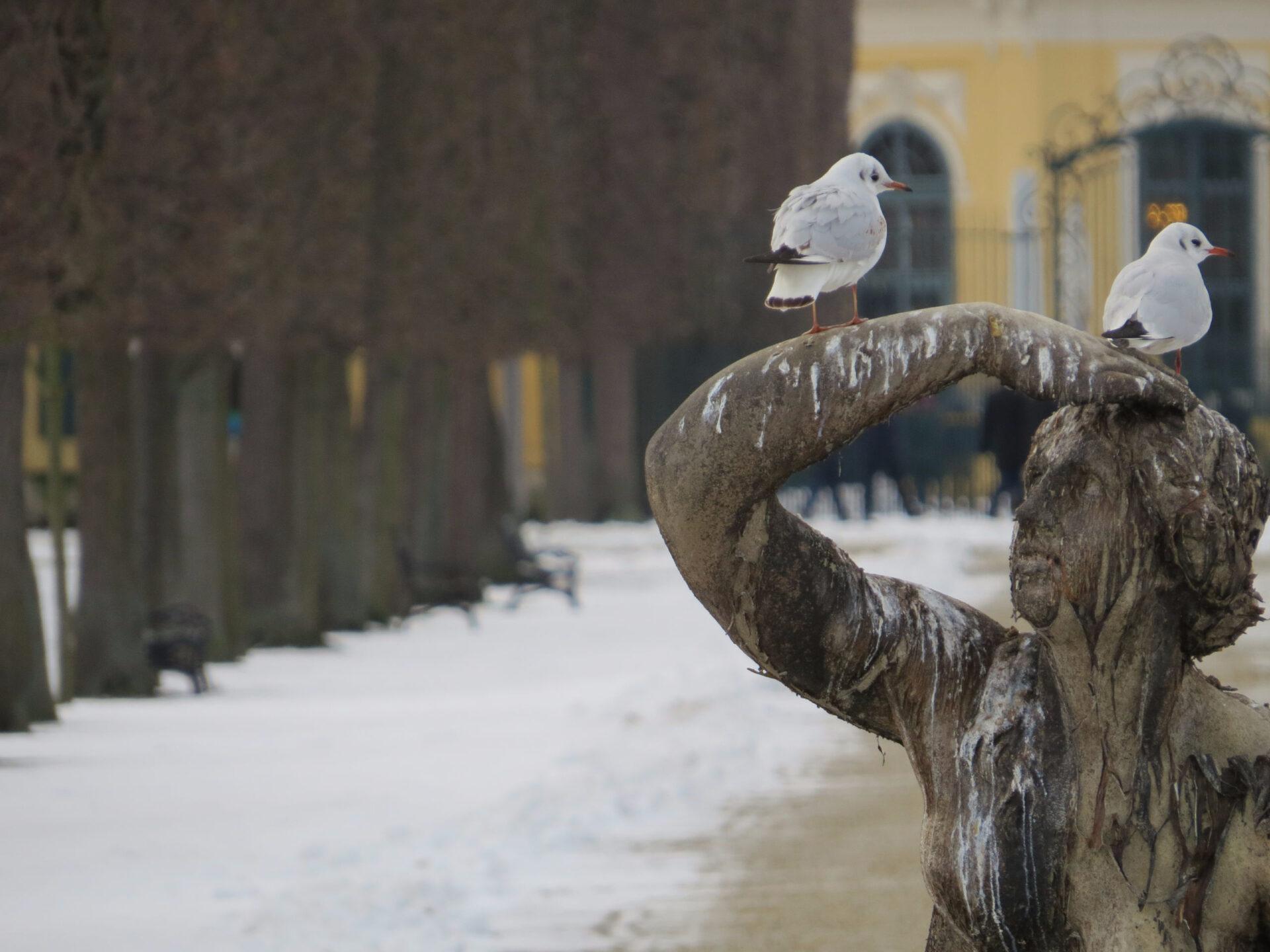 Зимний Шенбрунн или как приготовить венский штрудель