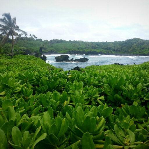 Гавайи, остров Мауи: природное многообразие, закат с кратера вулкана Халеакала, дорога на Хану