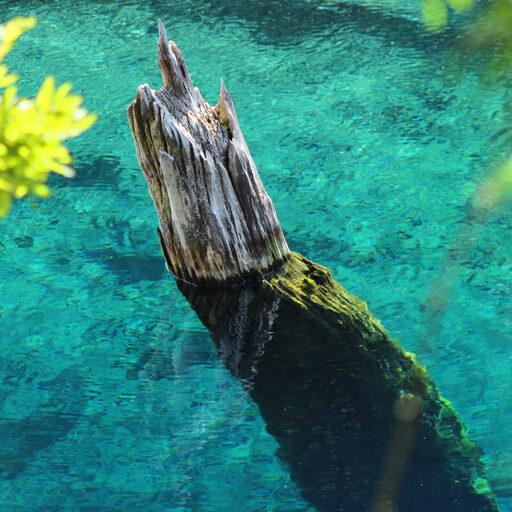 Чилийские араукарии. Динозавриный мир Конгуийо