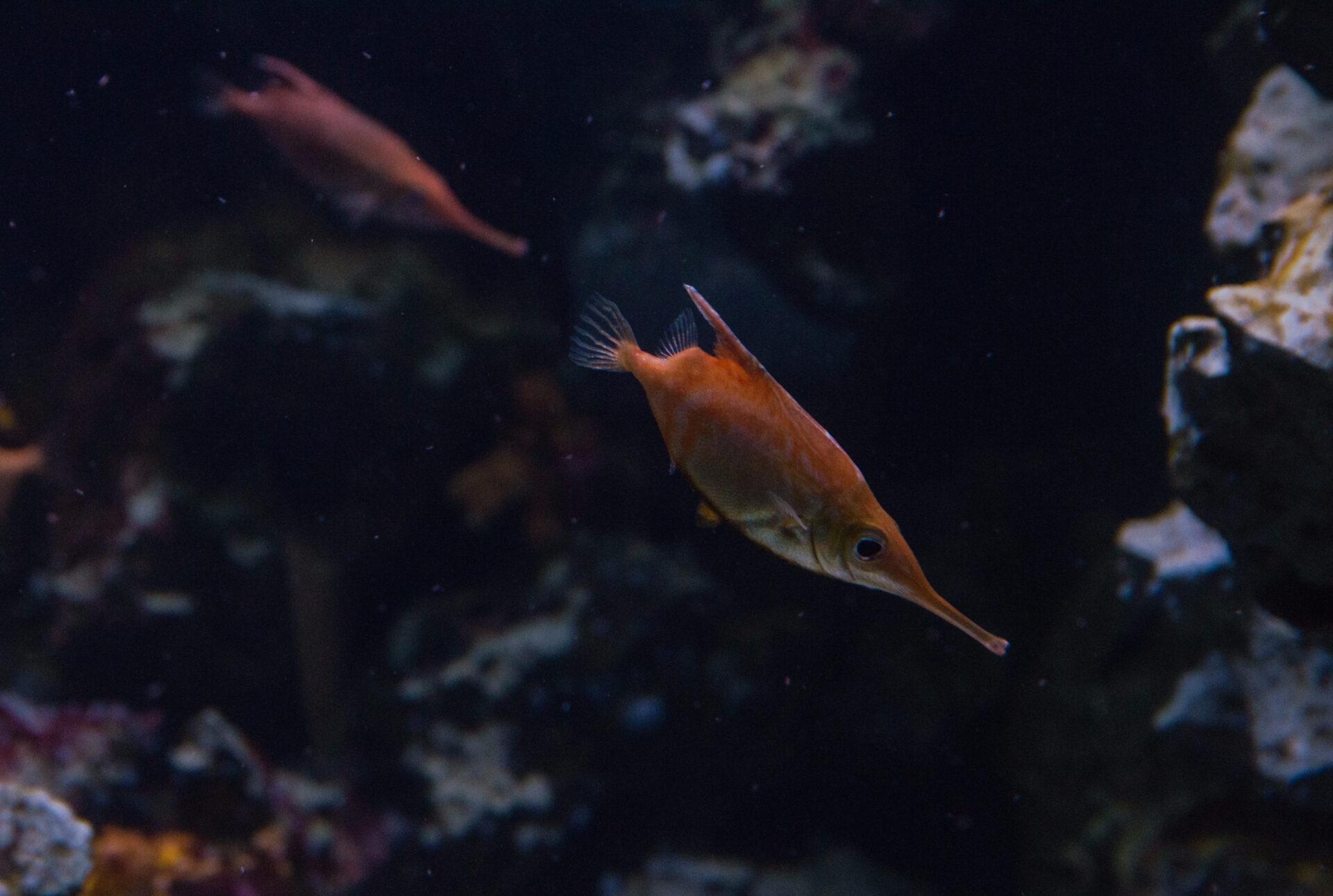 Берлинский аквариум