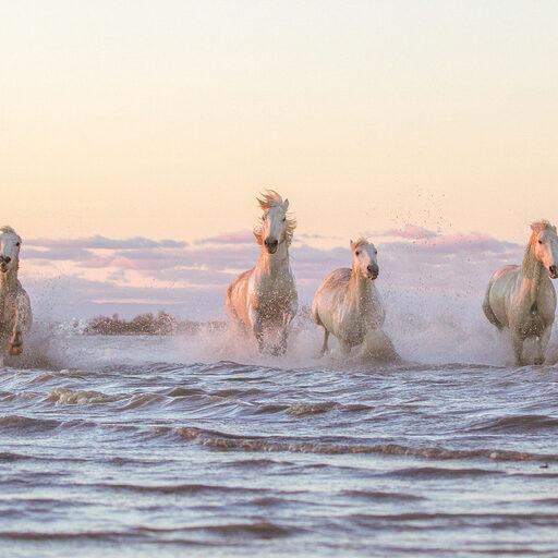 От рассвета до заката с белыми лошадьми Камарга