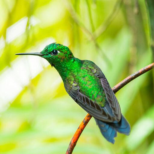 Такие разные… колибри ;)