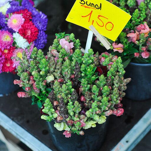Еще немного про рынок цветов в Кельне
